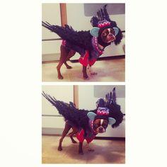 Boston Terrier Costume - Flying Monkey