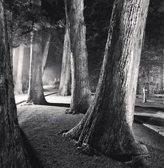 Entrance Path, Okunoin, Koyasan, Japan, 2006 / michael kenna
