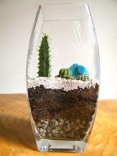 Terrario de cactus • KALi https://www.facebook.com/kaliterrarios