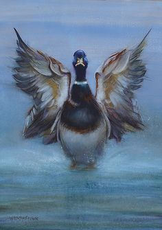 Flap your Wings it's Friday Wildlife Paintings, Bird Paintings, Nautical Art, Wings, Watercolor, Friday, Animals, Paintings Of Birds, Animales