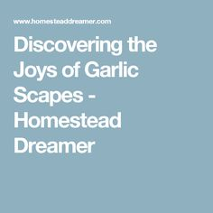 Discovering the Joys of Garlic Scapes - Homestead Dreamer