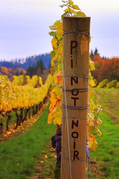 Oregon is Pinot Noir country