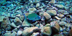 Fisch © Christine Gruber