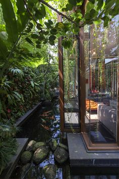 bassin carpe koï de forme asymétrique, terrasse design et végétation foisonnante