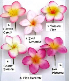 Different types of plumerias