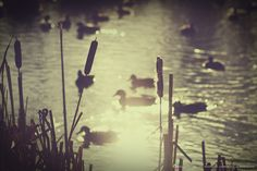 Silhouettes by the pond... by Lorena Masi on 500px