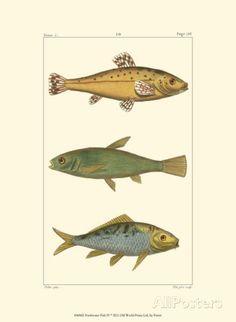 Freshwater Fish IV Art at AllPosters.com