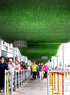 grass ceilings - Google Search