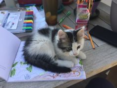 Scat loves to watch me color.