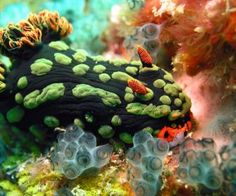 nature photography underwater sea slugs animals
