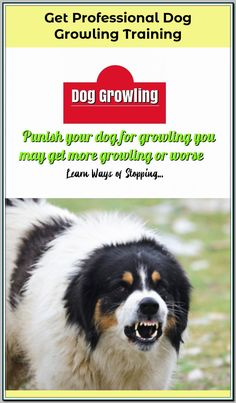 Get Your Dog Trained at Home without Professional by Reading The 10 Pro Tips for Dog Training by Experts and Get Rid of All Hassles! Training Your Puppy, Dog Training Tips, Dog Growling, Puppy Day, Dog Whisperer, Can Dogs Eat, Dog Behavior, Best Relationship, Dog Owners