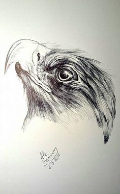 Título: Perfil de Águila - Dibujo a mano alzada con Bolígrafo (47x32cm) - San Luis, Argentina - Autora: Alejandra Etcheverry