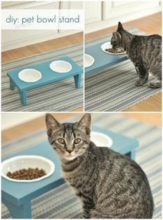 Why buy when you can DIY? These project ideas let you create everything you need for your cat. From dish stands to cat trees, you can make everything!