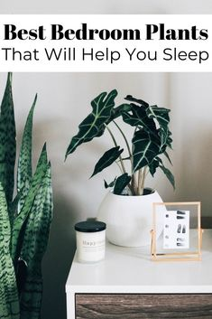 These Bedroom Plants Will Improve Your Sleep - House Plants - ideas of House Plants - Improve your home's air quality while also earning some blissful shut-eye thanks to these hard-working plants. West Elm, Best Plants For Bedroom, Best Plants For Home, Home Decor With Plants, Plants For Bathroom, Cool Plants, Houseplants, Decoration, Indoor Plants
