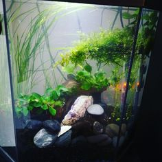 aquarium special combattant Aquariums, Freshwater Aquarium, Tanked Aquariums, Fish Tanks