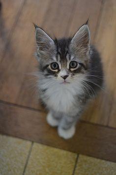 such a cute kitten.