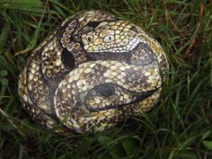 Timber+Rattle+Snake+Hand+Painted+Rock+Art+Realistic+Garden+Home+Decor+LOOK+