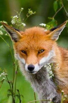 Friendly Fox by Brian Scott on 500px
