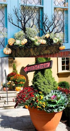 22 Beautiful Fall Planters for Easy Outdoor Fall Decorations 22 gorgeous fall planters for Thanksgiving & fall decorations: best fall flowers for pots, & great autumn planter ideas with mums, pumpkins, kale, & more! - A Piece of Rainbow Fall Harvest Decorations, Halloween Decorations, Kitchen Decorations, Thanksgiving Decorations, Fall Planters, Outdoor Planters, Lemon Lime Nandina, Christmas Cactus Care, Fall Containers