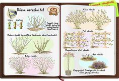 Outdoor Plants, Indoor Outdoor, Timeline Photos, Herb Garden, Gardening Tips, Garden Design, Infographic, Pergola, Vintage World Maps
