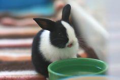 Tallulah Rabbit
