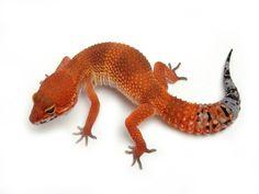 Tangerine Tornado   The Urban Gecko