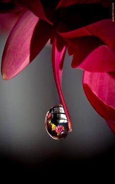 #Macro Photography,,reflective droplet.