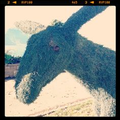 Donkey in Montreux Riviera