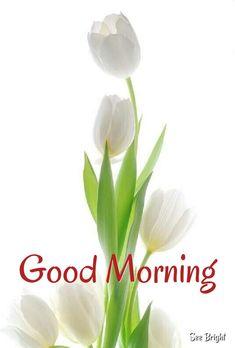Good Morning... Good Morning Happy, Good Morning Good Night, Good Morning Wishes, Good Morning Quotes, Night Quotes, Good Morning Greeting Cards, Good Morning Messages, Good Morning Greetings, Morning Pictures