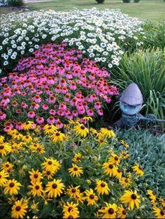 echinacea, leucanthemum and rudbeckia