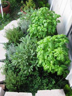 herbs 10.25.09