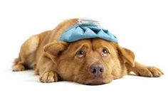 Did you know dogs, cats and humans all have similar symptoms when it comes to colds and th flu? Check it out in this week's Whisker Fabulous blog post!