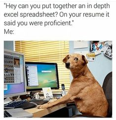 Just when you need it, INCOMING with a dose of doggo positivity in the form the silliest memes of the most wholesome boys and girls. They're the best, they love us, and we love them. So, allow these happy puppers to being some happiness into your day. #internetmemes #wholesome #dogs #pupper #puppy #dogmemes #funnymemes #cute #Memes #doggo #bark #doggomemes #funny