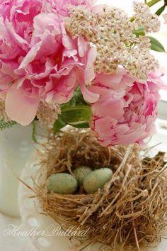 Beautiful Springtime Birds Nest