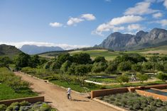 Babylonstoren, luxury hotel in South Africa is a stunning wine farm in the heart of the Cape Winelands. Wine Country, Country Roads, South Africa Tours, Day Tours, Cape Town, Day Trip, Best Hotels, Beautiful Landscapes, Explore