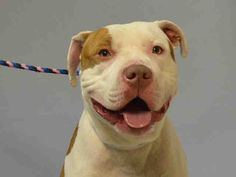 HAZITO - A1100695 - - Brooklyn TO BE DESTROYED 01/10/17 **PUBLICLY ADOPTABLE** - Click for info & Current Status: http://nycdogs.urgentpodr.org/hazito-a1100695/