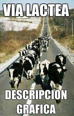 Imagenes chistosas de memes para compartir - http://www.fotosbonitaseincreibles.com/imagenes-chistosas-memes-compartir-2/