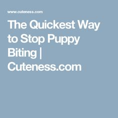 The Quickest Way to Stop Puppy Biting | Cuteness.com