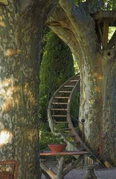 Stairway to the trees provence