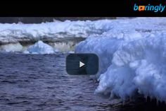 Wow! Watch an #amazing video of #penguins jumping up on ice  #funnyvideo #penguinsvideo #funny