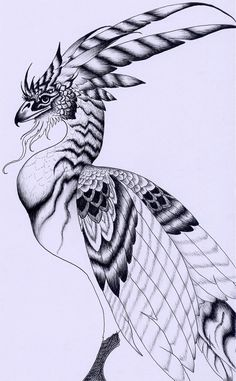 °Chamrosh by verreaux ~ A bird of Persian myth said to be the archetype of all birds & the ruler & protector of all avifauna on Earth