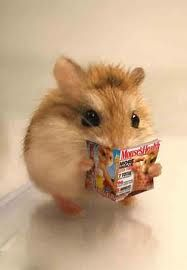 Hamster:I need to cut down on my sunflower seeds                                                                                                                                                      More