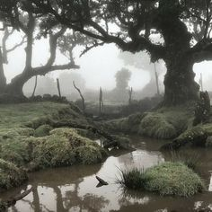 Dark Paradise, Nature Aesthetic, Aesthetic Pictures, Mother Nature, Cool Pictures, Grunge, Scenery, Dear Diary, River