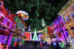 Osborne's Christmas lights. Disneyworld's Hollywood studios.