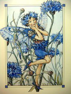 The Cornflower Fairy ~ Cicely Mary Barker