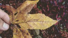 Plant Leaves, World, Nature, Plants, Photography, Instagram, Naturaleza, Fotografia, Photograph
