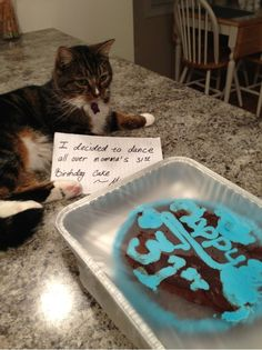 It may be called pet shaming, but cats have no shame. Bad Cats, Silly Cats, Crazy Cats, Cute Cats, Funny Animal Pictures, Funny Animals, Cute Animals, Animal Captions, Animal Memes