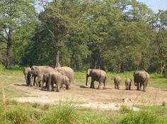 Capture wildlife at Dooars. http://in.musafir.com/Holidays/Beautiful_Dooars.aspx