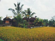Ubud, Bali | http://wander-full.com/2014/07/07/tranquility-2/