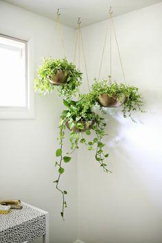 Zimmerpflanzen in Metallschalen